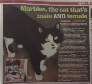 Cat which is male and female